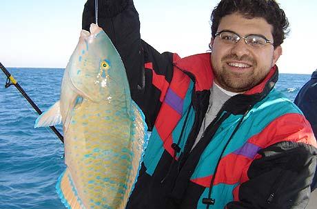 fishing صيد السمك فى النيل والبحر الاحمر والمتوسط بمصر Gulf_of_Suez_Amr_Parrot_Fish