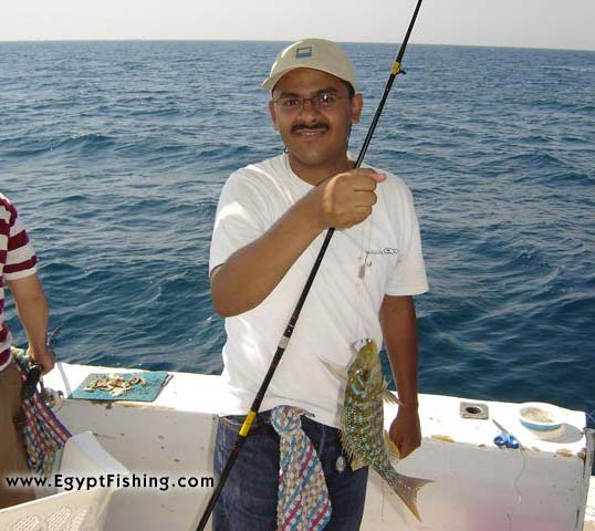 Egyptian saltwater fishing-Gulf of Suez (Lethrinus Nebulosus)