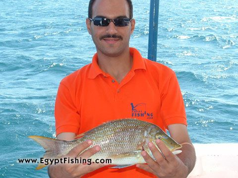 Fishing the Red Sea (Lethrinus Nebulosus)