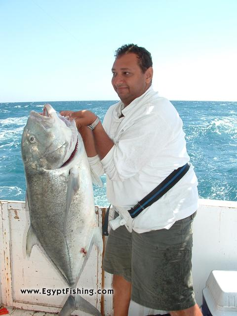 Photo of Caranx Ignobilis-Giant Trevally (GT) in Egypt: Saltwater Deep sea trolling