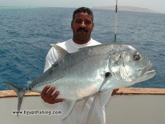 Picture of Egyptian Pesca (Fische): Deep sea trolling