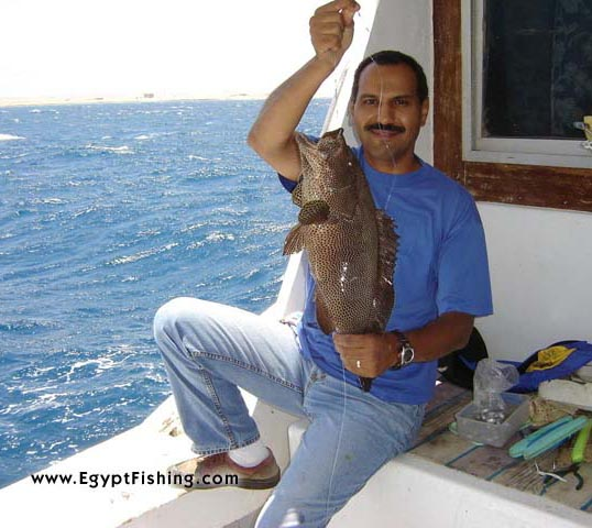 Handline fishing for Grouper in Egypt