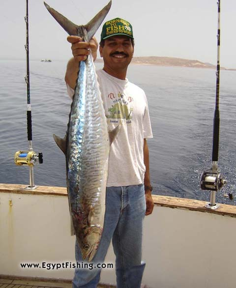Photo of deep-sea trolling trip for Red Sea Wahoo (King Fish) with Penn Reel