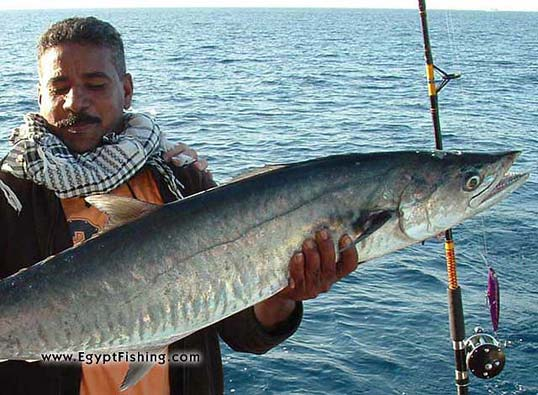 Deep-sea trolling of the Red Sea with spoon and Penn Reel