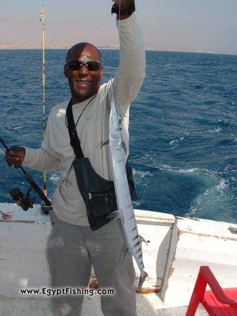 Pescar (Egipto): Needle Fish,Slow, Shallow Boat Trolling with Natural Bait,Gulf of Suez