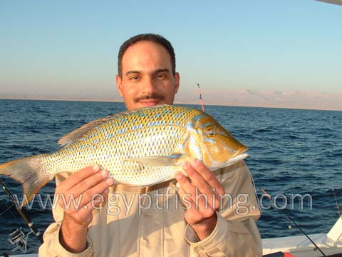 Photo of Emperor Fish (Lethrinus Nebulosus), Red Sea Fishing