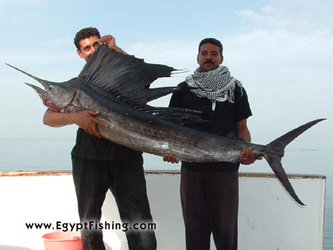 Red Sea Boat trolling in Hurghada, Sail Fish, Natural bait