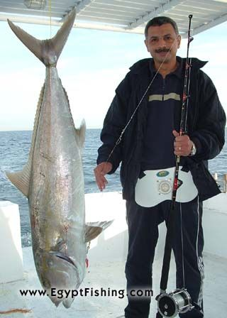 Image of Amberjack (Seriola dumerili) and Rapala lure in Egypt: Gulf of Suez trolling