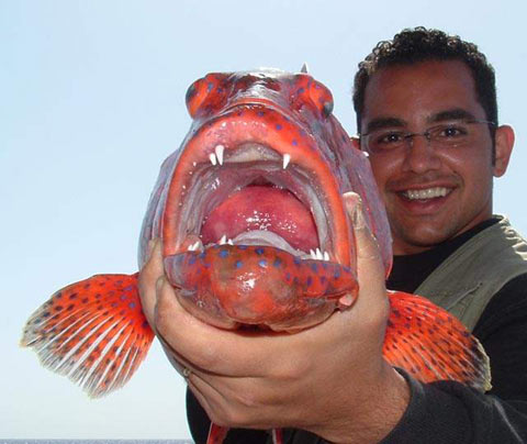 Sharm El-Sheikh fishing