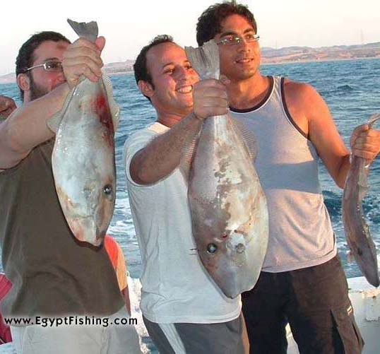 Red Sea Fishing with a saltwater spinning reel in Egypt