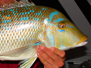 Link to Emperor Fish Photo Page