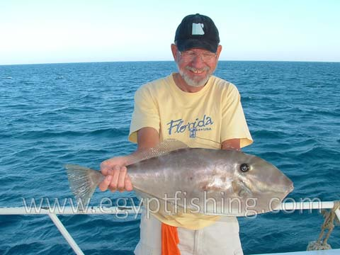 Day fishing charters are full of triggers and leather jackets (Aluterus Monoceros)