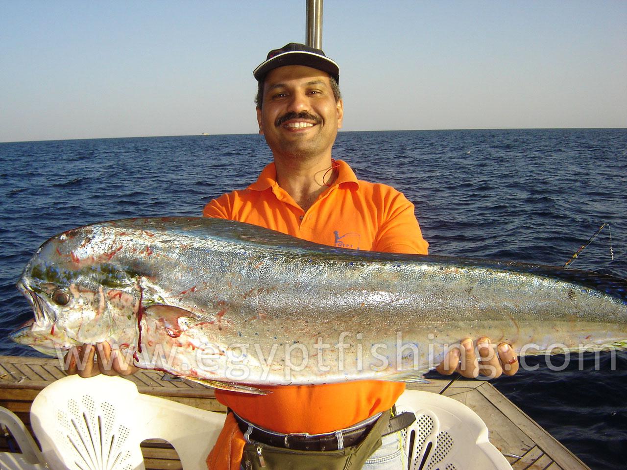 Egypt 39 s red sea fishing photos pg11 photos of mahi mahi for Red sea fish